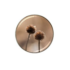 Withered Globe Thistle In Autumn Macro Hat Clip Ball Marker (4 Pack) by wsfcow