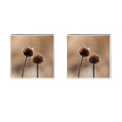 Withered Globe Thistle In Autumn Macro Cufflinks (square) by wsfcow