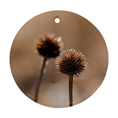 Withered Globe Thistle In Autumn Macro Round Ornament (two Sides)  by wsfcow