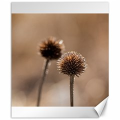 Withered Globe Thistle In Autumn Macro Canvas 8  X 10  by wsfcow