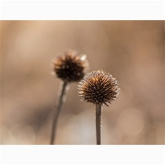 Withered Globe Thistle In Autumn Macro Canvas 12  X 16   by wsfcow