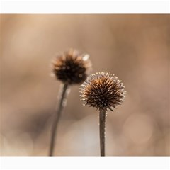 Withered Globe Thistle In Autumn Macro Canvas 20  X 24   by wsfcow