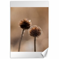 Withered Globe Thistle In Autumn Macro Canvas 24  X 36  by wsfcow