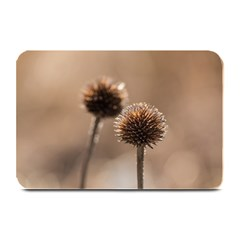 Withered Globe Thistle In Autumn Macro Plate Mats by wsfcow