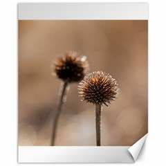 Withered Globe Thistle In Autumn Macro Canvas 11  X 14   by wsfcow