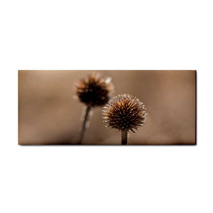 Withered Globe Thistle In Autumn Macro Hand Towel
