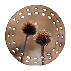 Withered Globe Thistle In Autumn Macro Ornament (round Filigree)  by wsfcow
