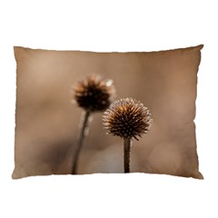 Withered Globe Thistle In Autumn Macro Pillow Case (two Sides) by wsfcow