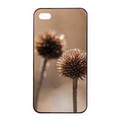 Withered Globe Thistle In Autumn Macro Apple Iphone 4/4s Seamless Case (black) by wsfcow