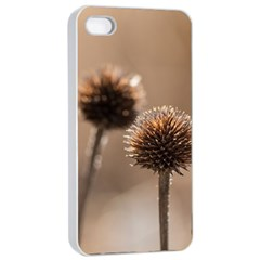 Withered Globe Thistle In Autumn Macro Apple Iphone 4/4s Seamless Case (white) by wsfcow