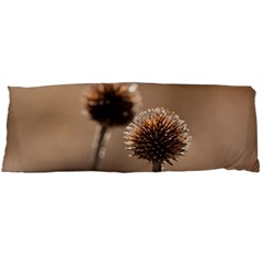 Withered Globe Thistle In Autumn Macro Body Pillow Case Dakimakura (two Sides) by wsfcow