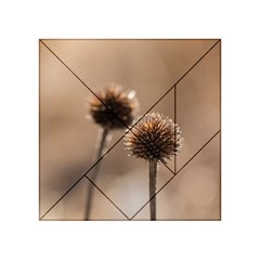 Withered Globe Thistle In Autumn Macro Acrylic Tangram Puzzle (4  X 4 ) by wsfcow