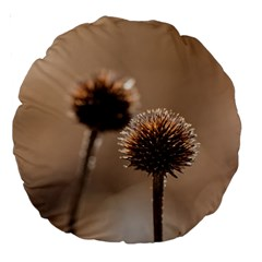 Withered Globe Thistle In Autumn Macro Large 18  Premium Round Cushions by wsfcow