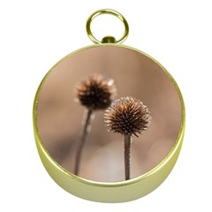 Withered Globe Thistle In Autumn Macro Gold Compasses by wsfcow