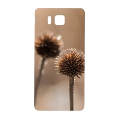 Withered Globe Thistle In Autumn Macro Samsung Galaxy Alpha Hardshell Back Case by wsfcow