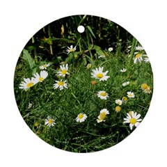 White Daisy Flowers Ornament (round)