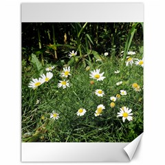 White Daisy Flowers Canvas 12  X 16