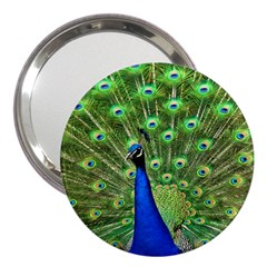 Bird Peacock 3  Handbag Mirrors