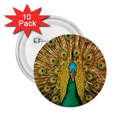 Bird Peacock Feathers 2 25  Buttons (10 Pack)