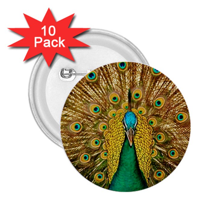 Bird Peacock Feathers 2.25  Buttons (10 pack)