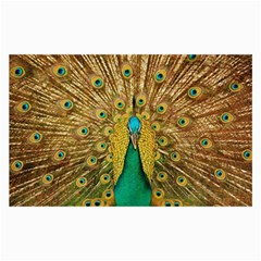Bird Peacock Feathers Collage Prints by AnjaniArt