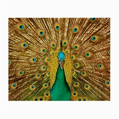 Bird Peacock Feathers Small Glasses Cloth (2 Side)