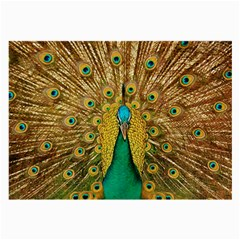 Bird Peacock Feathers Large Glasses Cloth