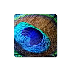 Blue Peacock Square Magnet