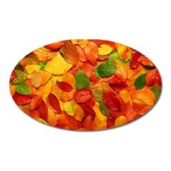 Colorful Fall Leaves Oval Magnet