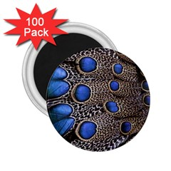 Feathers Peacock Light 2 25  Magnets (100 Pack)