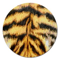 Tiger Fur Painting Magnet 5  (round) by AnjaniArt