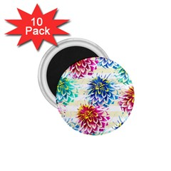 Colorful Dahlias 1 75  Magnets (10 Pack)