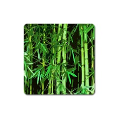 Bamboo Pattern Tree Square Magnet by AnjaniArt