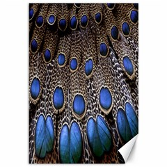 Feathers Peacock Light Canvas 12  X 18   by AnjaniArt