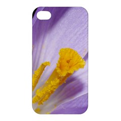 Purple Crocus Apple Iphone 4/4s Hardshell Case