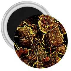 Leaves In Morning Dew,yellow Brown,red, 3  Magnets