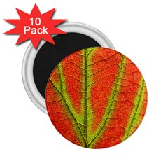 Unique Leaf 2 25  Magnets (10 Pack)  by AnjaniArt