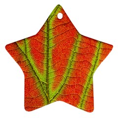 Unique Leaf Star Ornament (two Sides)