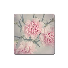 Cloves Flowers Pink Carnation Pink Square Magnet by Amaryn4rt