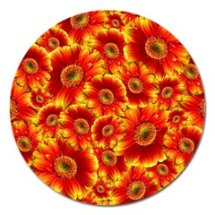 Gerbera Flowers Blossom Bloom Magnet 5  (round) by Amaryn4rt