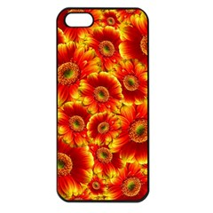 Gerbera Flowers Blossom Bloom Apple Iphone 5 Seamless Case (black) by Amaryn4rt