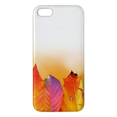 Autumn Leaves Colorful Fall Foliage Iphone 5s/ Se Premium Hardshell Case by Amaryn4rt
