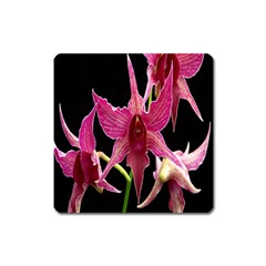 Orchid Flower Branch Pink Exotic Black Square Magnet by Jojostore