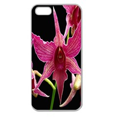Orchid Flower Branch Pink Exotic Black Apple Seamless Iphone 5 Case (clear) by Jojostore