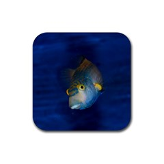 Fish Blue Animal Water Nature Rubber Square Coaster (4 Pack)  by Amaryn4rt