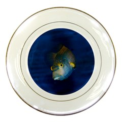 Fish Blue Animal Water Nature Porcelain Plates by Amaryn4rt