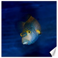 Fish Blue Animal Water Nature Canvas 20  X 20   by Amaryn4rt