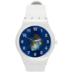 Fish Blue Animal Water Nature Round Plastic Sport Watch (m) by Amaryn4rt