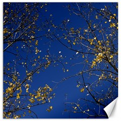 Poplar Foliage Yellow Sky Blue Canvas 20  X 20   by Amaryn4rt