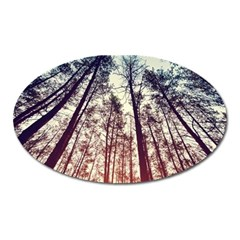 Up View Forest Oval Magnet by Brittlevirginclothing